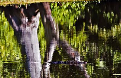 Alligator Art Print by Michael Whitaker
