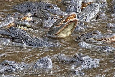Photograph - Alligator Nightmare by Alice Gipson