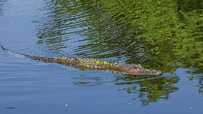 Photograph - Alligator On Patrol by Allen Sheffield