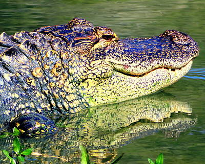Photograph - Alligator Reflection 4 20117 by Mark Lemmon