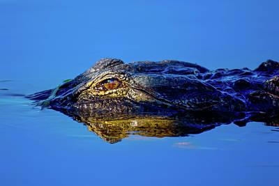 Beauty Mark Photograph - Alligator Sunrise by Mark Andrew Thomas