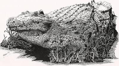 Drawing - Alligator by Bill Hubbard
