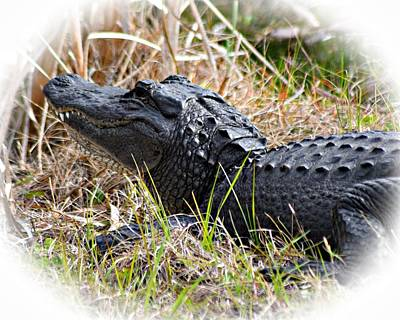Photograph - Alligator Toothy Grin 1 by Sheri McLeroy