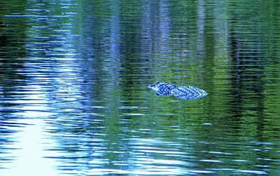Photograph - Alligator Way by Ric Schafer