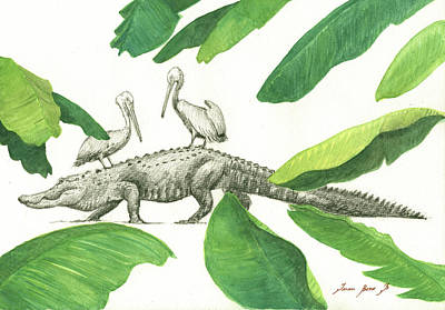 Alligator With Pelicans Print by Juan Bosco