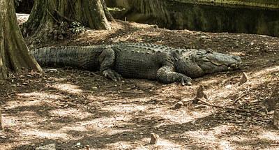 Photograph - Alligator Lowry Park Zoo 2 by Richard Goldman