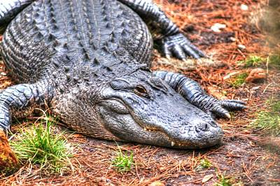 Photograph - Alligator02 by Donald Williams