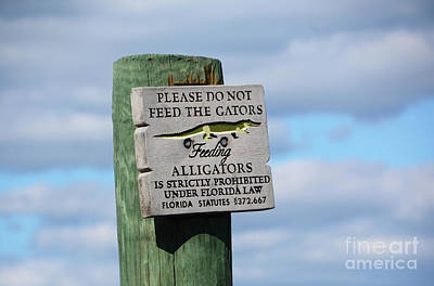 Photograph - Alligators by Cindy Manero
