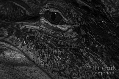 Photograph - Alligator's Eye by Jim Corwin