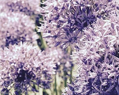 Photograph - Allium Art by Tim Good
