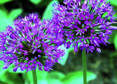 Mixed Media - Allium Bulbs by Allen Beatty