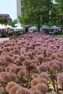 Photograph - Allium Bulbs - Boston by Allen Beatty