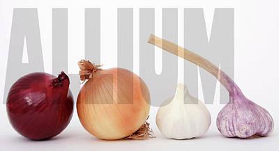 Scallion Photograph - Allium by Daniel Hagerman