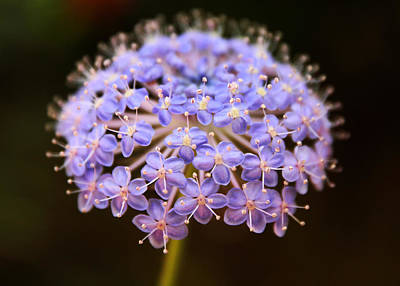 Lavender Digital Art - Allium Floral by Jessica Jenney