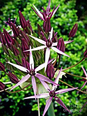 Photograph - Allium Macro 2 by Sarah Loft