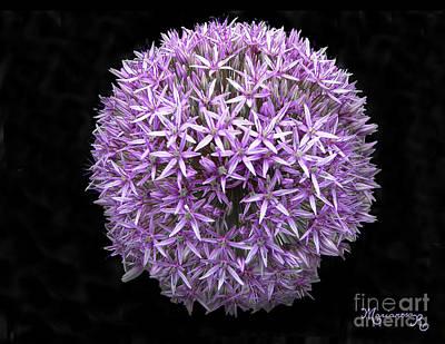 Photograph - Allium by Mariarosa Rockefeller