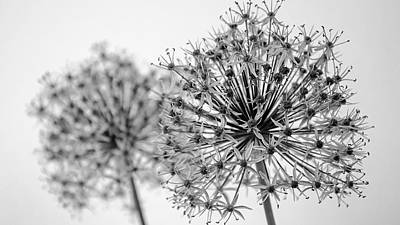 Photograph - Allium Paired   Black And White by Susan  McMenamin