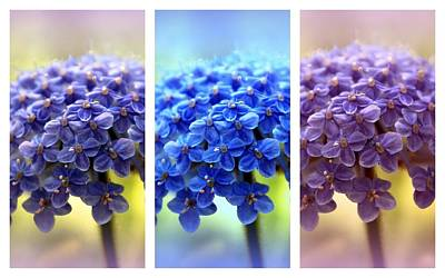 Photograph - Allium Triptych by Jessica Jenney