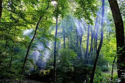 Photograph - Allschwiler Wald by Fabrizio Troiani
