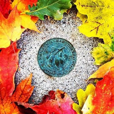 Photograph - Alma College Seal by Chris Brown