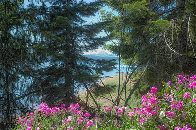 Photograph - Almanor Lassen Flowers by Peter Dyke