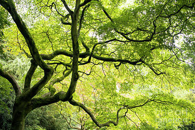 Photograph - Almighty Acer by Tim Gainey