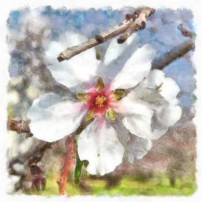Painting - Almond Blossom Study Watercolor by Taiche Acrylic Art