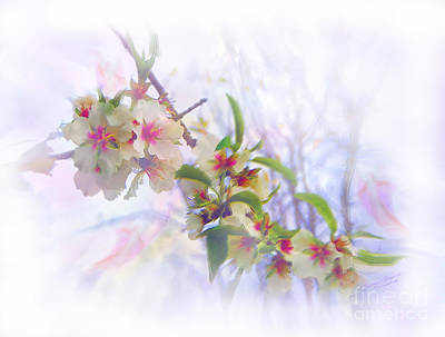 Painting - Almond Blossoms by Glenyss Bourne
