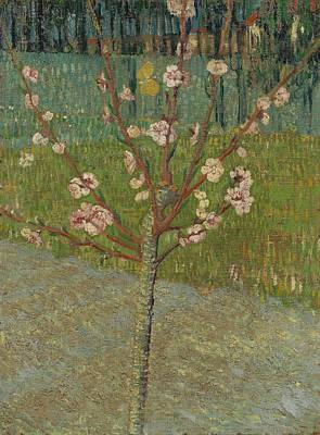 Van Gogh Blossoming Almond Tree Painting - Almond Tree In Blossom Arles by MotionAge Designs