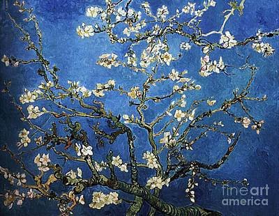 Van Gogh Blossoming Almond Tree Painting - Almond Tree In Blossom by Pg Reproductions