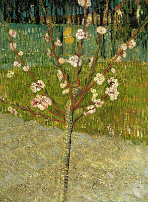 Van Gogh Blossoming Almond Tree Painting - Almond Tree In Blossom by Vincent van Gogh