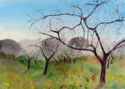 Painting - Almond Trees In Early Spring by Jenny anne Morrison