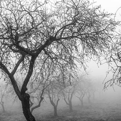 Almonds Into The Fog Art Print