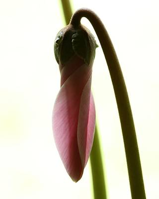 Photograph - Almost Blooming by I'ina Van Lawick