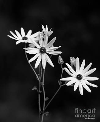 Photograph - Almost Perfect Black Eyed Susan Flower Art by Reid Callaway