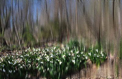 Photograph - Almost Spring by Jacqueline M Lewis
