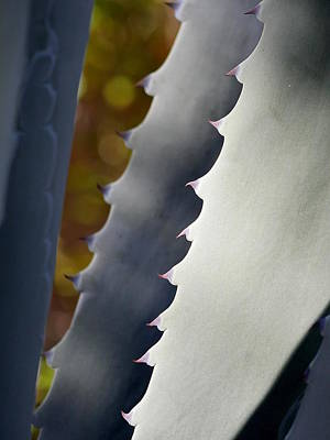 Photograph - Aloe Abstract by Richard Reeve