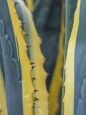 Photograph - Aloe Cactus Abstract 4664 by Tam Ryan