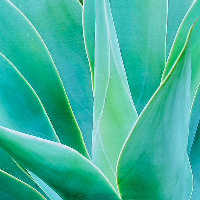 Photograph - Aloe Glow by Flying Z Photography by Zayne Diamond