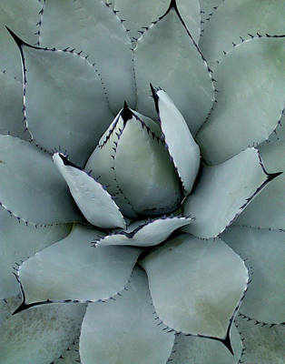 Photograph - Agave by Melinda Blackman
