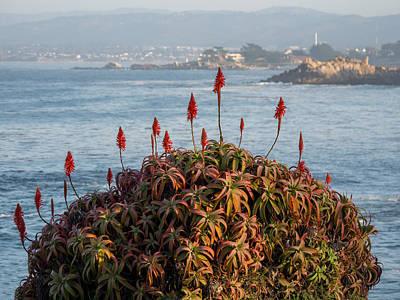 Photograph - Aloe Over Monterey by Derek Dean