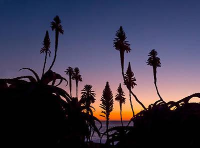Photograph - Aloe Sunset by Derek Dean