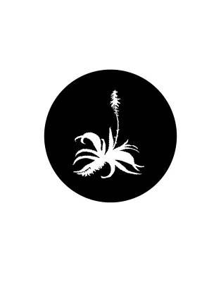 Aloe Vera Painting - Aloe Vera by Mordax Furittus