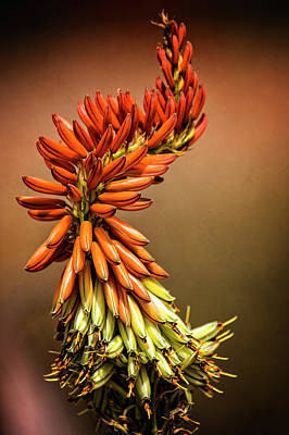 Photograph - Aloe Vera Twist  by Saija Lehtonen