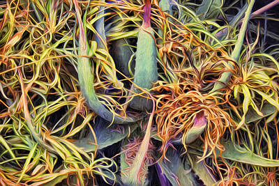 Digital Art - Aloe Very by Becky Titus