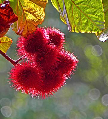 Photograph - Aloha Flowers I  by Elizabeth Hoskinson
