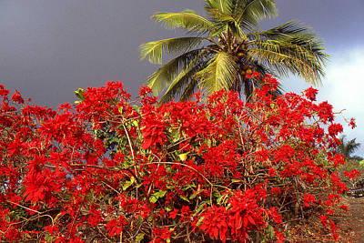Photograph - Aloha From Hawaii Botanical Garden by Peter Potter