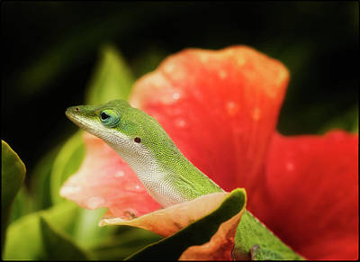Photograph - Aloha Mauna Loa Lizard by Linda Tiepelman
