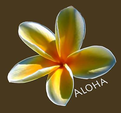 Photograph - Aloha Plumeria by Pamela Walton