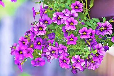Hanging Basket Digital Art - Aloha Purple Sky Calibrachoa Abstract I by Linda Brody